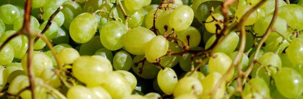 bilde av druer, grønne